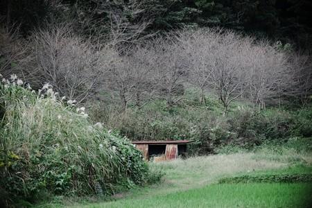 2016.10.21 追分市民の森 田圃 蟋蟀在戸