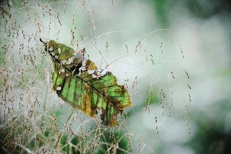 2016.10.31 追分市民の森 風草に枯葉