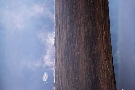 2016.11.01 瀬谷市民の森 樹から煙 雨の後