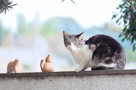 2016.11.07 追分市民の森 ネコ・(=^・^=)・猫