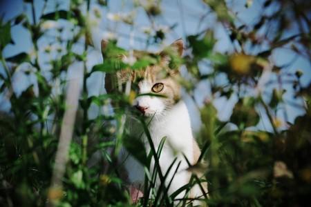 2016.11.22 追分市民の森 畦で感じた視線 ネコ