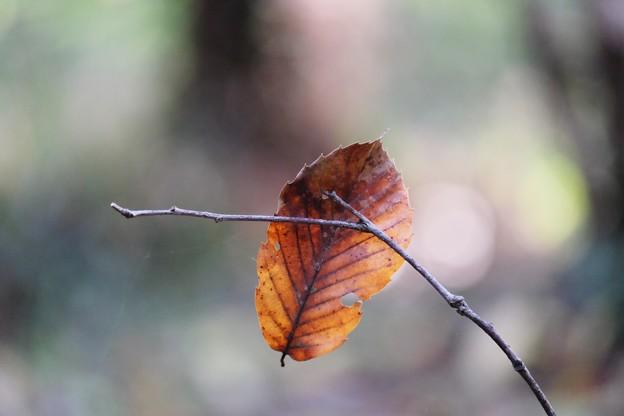 2016.11.26 瀬谷市民の森 枝に枯葉