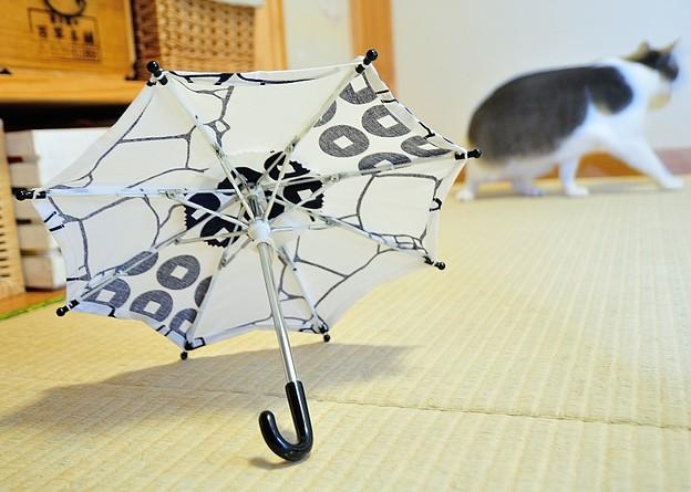 バジルの傘2