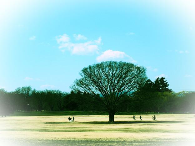 あの~木何の木?