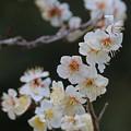 写真: 春の花1