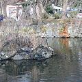写真: 神池と亀