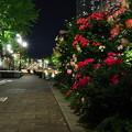 Photos: 光と花壇
