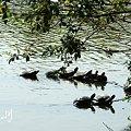Photos: 亀たち・・