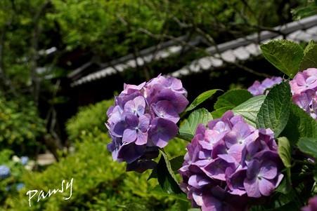 風待月の東慶寺・・8