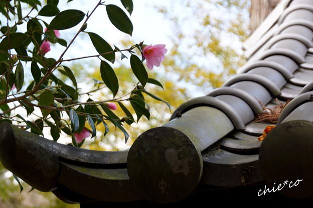 北鎌倉-355