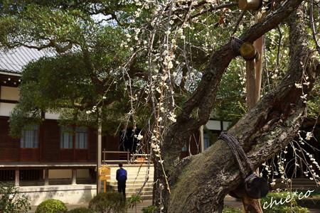 北鎌倉-442