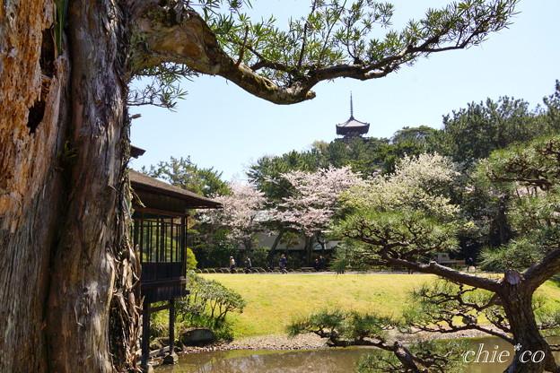 三渓園~桜咲くころ~-235