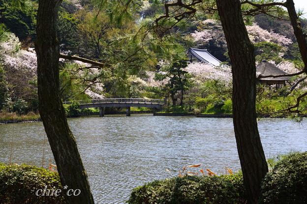 三渓園~桜咲くころ~-236