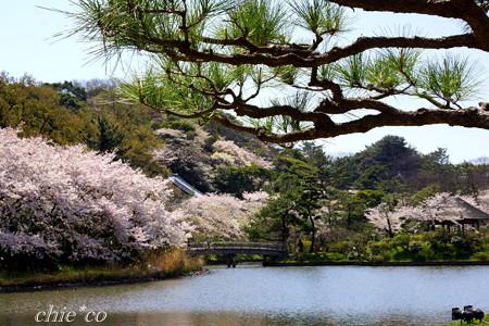 三渓園~桜咲くころ~-237
