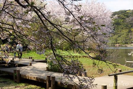 三渓園~桜咲くころ~-240