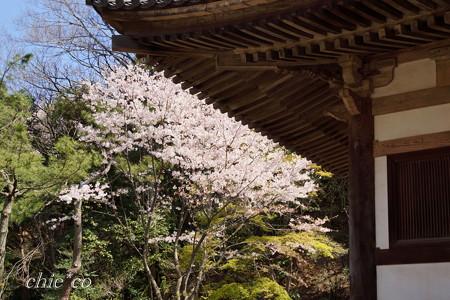 三渓園~桜咲くころ~-245