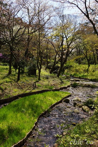三渓園~桜咲くころ~-252