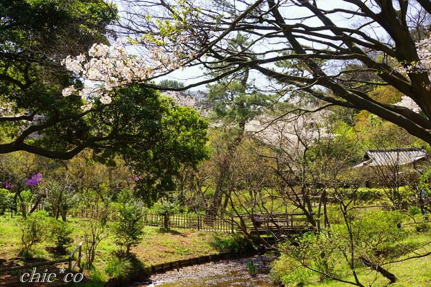 三渓園~桜咲くころ~-253