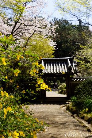 三渓園~桜咲くころ~-268