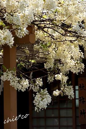 鎌倉-340