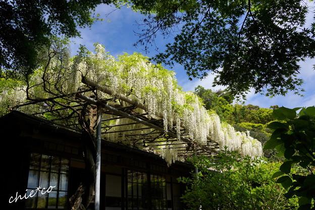 鎌倉 英勝寺-269