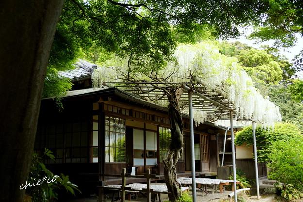 鎌倉 英勝寺-272