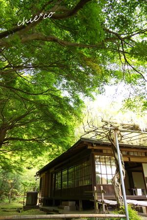 鎌倉 英勝寺-286