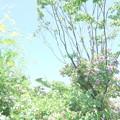写真: 横浜イングリッシュガーデン-809