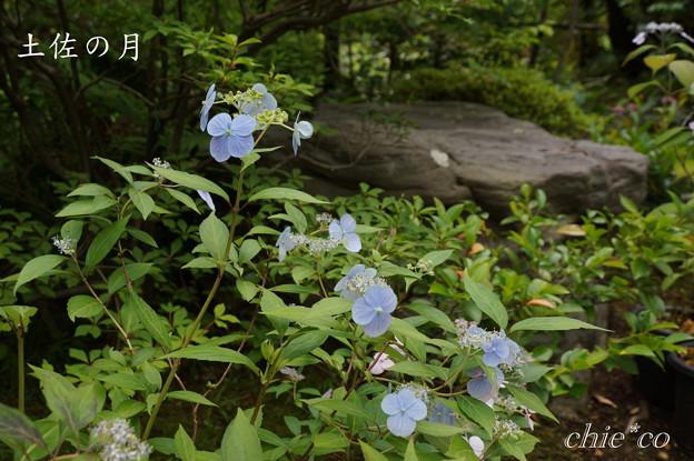 Kamakura-765