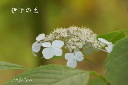 Kamakura-775