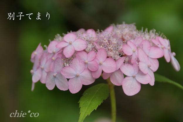 Kamakura-815