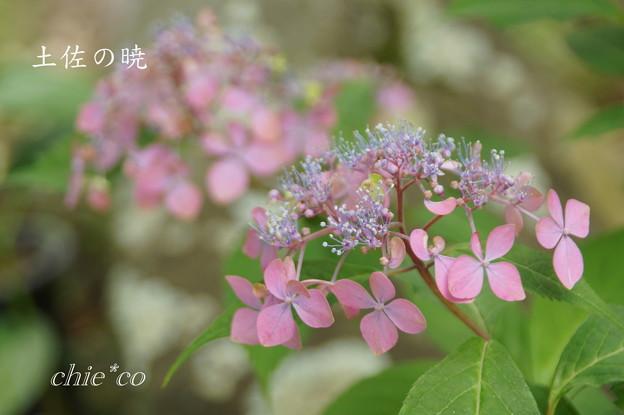 Kamakura-827