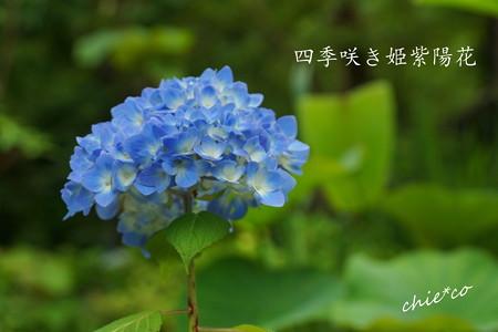 DSC05188-001