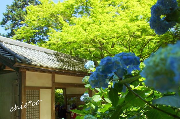 北鎌倉-451