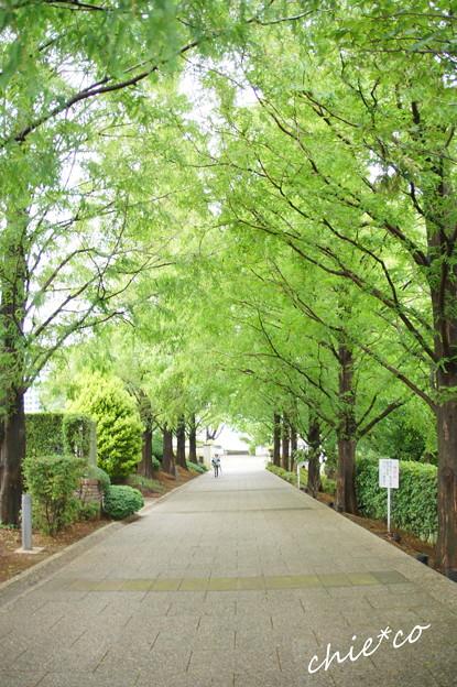 横浜山手-335