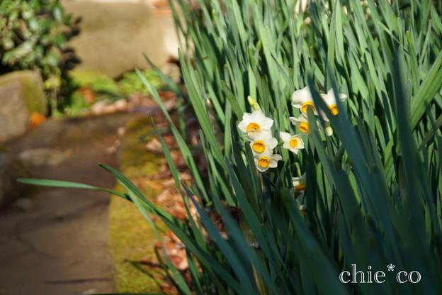 初春の鎌倉-221