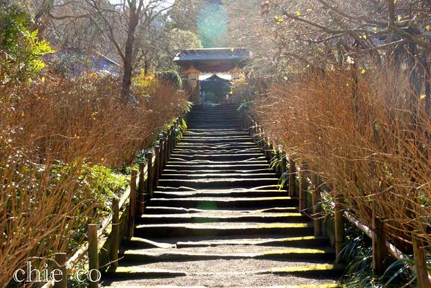 初春の鎌倉-252