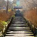 写真: 初春の鎌倉-252