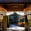写真: 初春の鎌倉-253