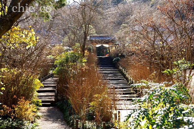 初春の鎌倉-254