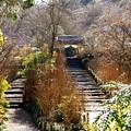 写真: 初春の鎌倉-254
