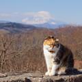 写真: 吾妻山公園-253