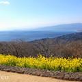 写真: 吾妻山公園-256