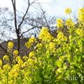 写真: 吾妻山公園-262