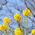 写真: 吾妻山公園-263