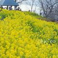 写真: 吾妻山公園-267