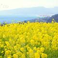 写真: 吾妻山公園-272