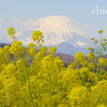 写真: 吾妻山公園-274