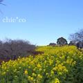 写真: 吾妻山公園-282