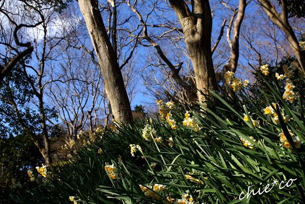 吾妻山公園-296
